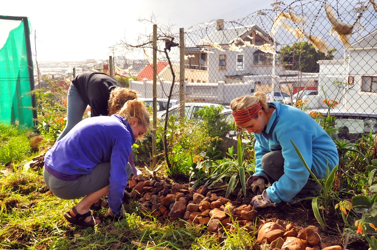 urban farming internship cape town