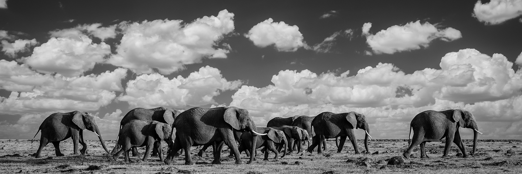 A Content Writer's Journey to Wildlife Conservation