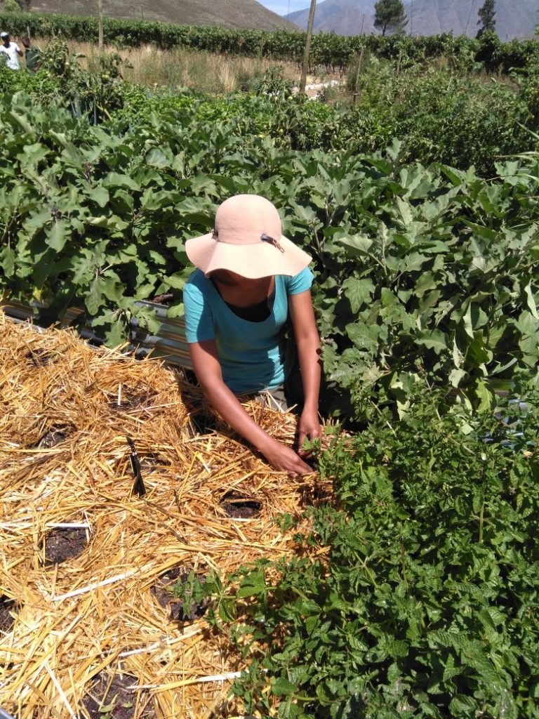 food security internship cape town