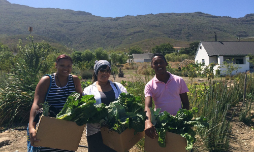 NGO Management and Organic Farming Internship