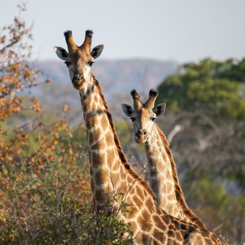 Wildlife conservation internships Africa