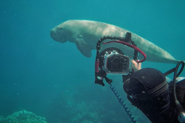Marine photography internship